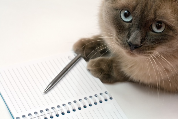 Funny business concept - cat, pen and blank open notepad